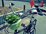 A little garden to brighten my ride