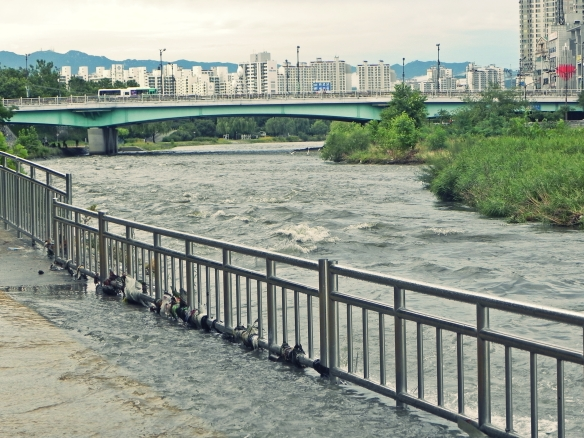 Sinchon River - Daegu South Korea